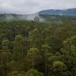 """Data dari Kementerian Kehutanan Tahun 2010 menyatakan bahwa dari 31 864 jumlah desa, terdapat 16 760 desa (52.60%) yang memiliki kawasan hutan antara lain pada hutan lindung terdapat 6.243 desa, hutan produksi 7 467 desa, hutan produksi terbatas 4 744 desa dan hutan produksi konversi 3 848 desa dan hutan konservasi sebanyak 2 270 desa. Dari jumlah kepala keluarga sebanyak 21 563 447, terdapat sebanyak 448 630 kepala keluarga (2.08%) dalam kawasan hutan dan sebanyak 3 956 748 kepala keluarga (18.35%) di tepi kawasan hutan. Data tersebut menunjukkan bahwa desa sangat bersinggungan dengan kawasan hutan. Kata salah seorang masyarakat desa """"yang mana sesungguhnya benar, desa yang masuk hutan atau hutan yang masuk desa?"""". Hutan Desa eksis secara sosiologis, baik itu berada dalam kawasan hutan (atau hutan negara) maupun berada di luar kawasan (atau hutan hak/rakyat). Seperti halnya tanah bengkok (yang banyak ditemukan di Jawa), tanah kas desa, atau sebutan lainnya telah mengalami penurunan fungsi semenjak tata ruang kawasan hutan oleh negara. Praktik-praktik tradisional masyarakat dalam membangun hutan di desa mereka mengalami evolusi dari desa ke pemerintah. Awang (2003) membagi pengertian hutan desa dari beberapa sisi pandang, yaitu : (a) dilihat dari aspek teritorial, hutan desa adalah hutan yang masuk dalam wilayah administrasi sebuah desa definitif dan ditetapkan oleh kesepakatan masyarakat, (b) dilihat dari aspek status, hutan desa adalah kawasan hutan negara yang terletak pada wilayah administrasi desa tertentu dan ditetapkan oleh pemerintah sebagai hutan desa, (c) dilihat dari aspek pengelolaan, Hutan Desa adalah kawasan hutan milik rakyat dan milik pemerintah (hutan negara) yang terdapat dalam satu wilayah administrasi desa tertentu dan ditetapkan secara bersama-sama antara pemerintah daerah dan pemerintah sebagai hutan desa yang dikelola oleh organisasi masyarakat desa. Awang sendiri lebih cenderung pada pengertian (c) sebagai definisi ideal hutan desa. Sementara"""