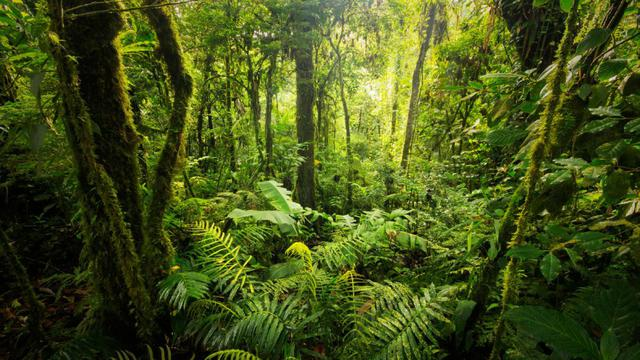 Hari Hutan Internasional diperingati pada 21 Maret setiap tahunnya. Penetapan ini berdasarkan pada hasil Perserikatan Bangsa-Bangsa (PBB) melalui Resolusi Nomor 67/200 Tahun 2012. Tujuan ditetapkannya Hari Hutan Internasional adalah untuk meningkatkan kesadaran publik tentang pentingnya keberadaan semua jenis hutan dan pohon di luar hutan. Berdasarkan UU Nomor 41 Tahun 1999 tentang Kehutanan, hutan adalah suatu kesatuan ekosistem berupa hamparan lahan berisi sumber daya alam hayati yang didominasi pepohonan dalam persekutuan alam lingkungannya, yang satu dengan lainnya tidak dapat dipisahkan. Jika kita berbicara tentang hutan, maka kita tidak hanya membicarakan tentang kawasannya saja, tetapi meliputi seluruh komponen yang menjadi penyusun ekosistem hutan tersebut seperti tumbuhan, satwa, dan seluruh keanekaragaman hayati yang ada di dalam hutan. Di Indonesia, luasan hutan berdasarkan data Kementerian Lingkungan Hidup dan Kehutanan (KLHK) sekitar 125,9 juta hektare (ha) atau seluas 63,7% dari luasan Indonesia. Indonesia memiliki keanekaragaman hayati yang sangat tinggi, meliputi keanekaragaman hayati flora maupun fauna yang ada. Hutan Indonesia ditumbuhi 11% spesies tumbuhan, 12% mamalia, 15% herpetofauna, serta 17% burung dari total populasi dunia. Hal tersebut merupakan modal dasar bagi bangsa Indonesia untuk dapat mengembangkan ilmu pengetahuan, teknologi, dan seni (IPTEKS) di bidang hutan tropika. Hutan-hutan tersebut juga memberikan banyak produk seperti kayu, buah, sayuran, kacang-kacangan, rempah-rempah, obat-obatan, minyak atsiri, pakan ternak, tumbuhan pewarna, pestisida, dan lain-lain. Keanekaragaman hayati yang ada di dalam hutan tersebut merupakan sarana untuk meningkatkan kesejahteraan dan kemakmuran rakyat Indonesia. Dalam ilmu etnobiologi, masyarakat di Indonesia telah lama berinteraksi dengan ekosistem hutan, sehingga muncul pengetahuan lokal tentang pemanfaatan keanekaragaman hayati yang ada di dalam hutan berdasarkan pengalaman masyarakat selama pu
